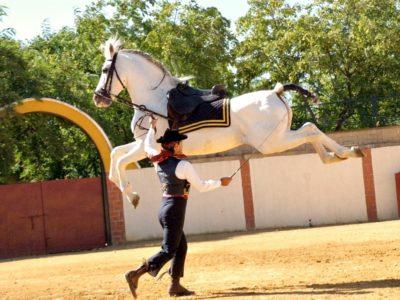 horse-show-seville