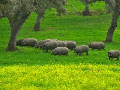 pig farm visit