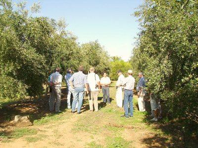 olive-oil-visit-from-seville