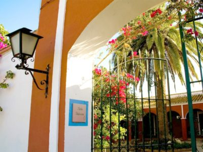 seville olive oil visit