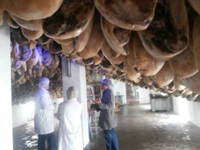 pig-farm-visit-4