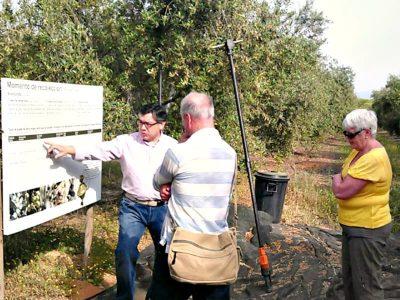 private-olive-oil-visit-seville
