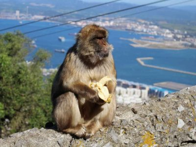 day-trip-gibraltar-from-seville-2