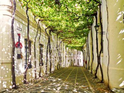 day-trip-jerez-cadiz-from-seville-42